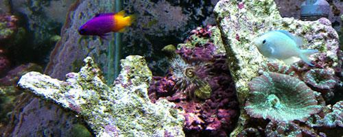 Clean-A-Tank | Aquarium Specialists :: Home